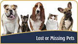 Lost Missing Pets2